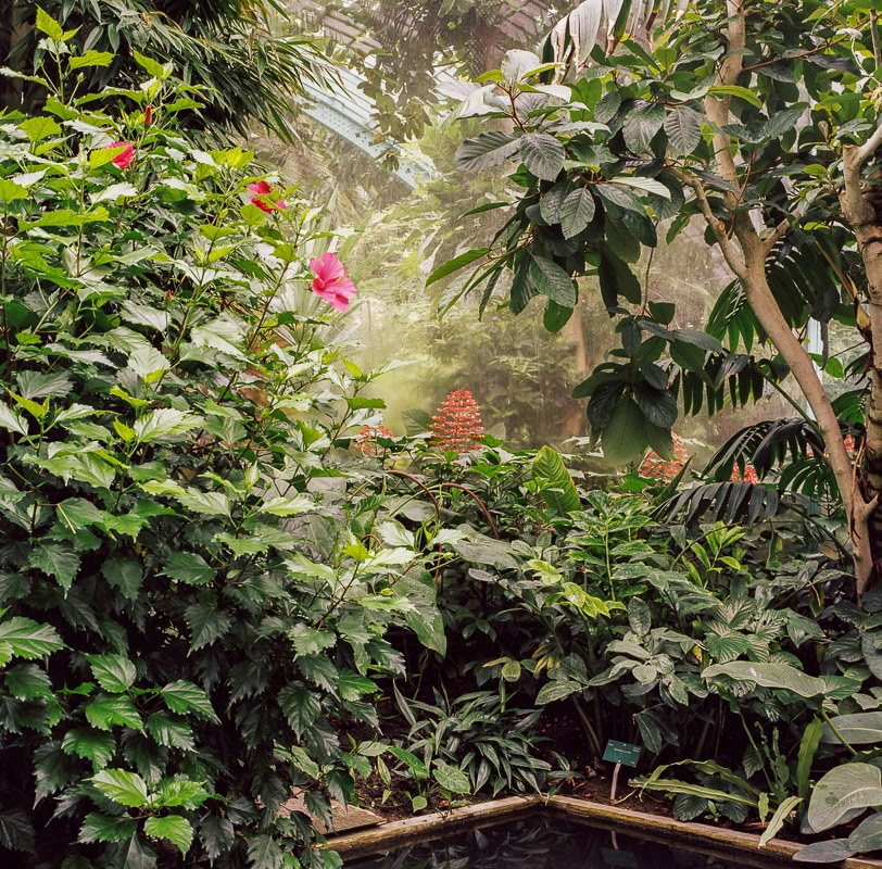 Inside a greenhouse in Paris